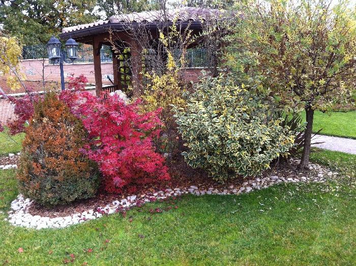 Piante Con La I : Universal vivaio progetazione e realizzazione giardini